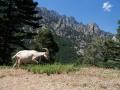 Corse juin-32.jpg